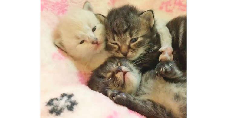 三匹の子猫がむぎゅ〜っと密着♪ 仲良しニャンコズの、可愛すぎるお寝んね姿…(*´ェ`*)♡