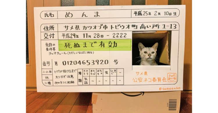 世界で1つの『ネコ免許証』が誕生!?  ひょこっと出た顔や、こだわりの作りがおもしろ可愛いと話題に♡