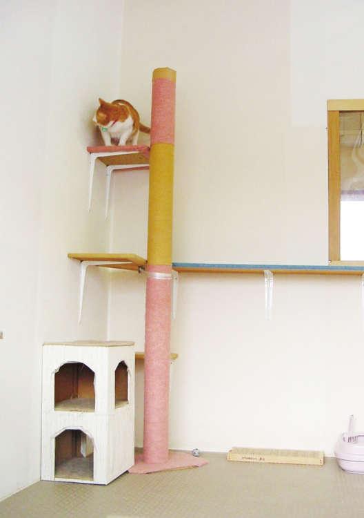 手作りの猫用ジャングルジム