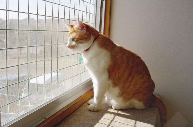 窓の外が見える場所は猫にも人気