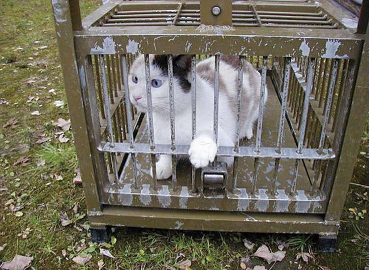 捕獲器で保護された猫