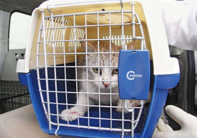 20キロ圏内から保護された猫