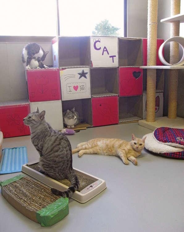 東京都動物救援センター。「CAT」の棚は、最後に猫といっしょにもらわれていった