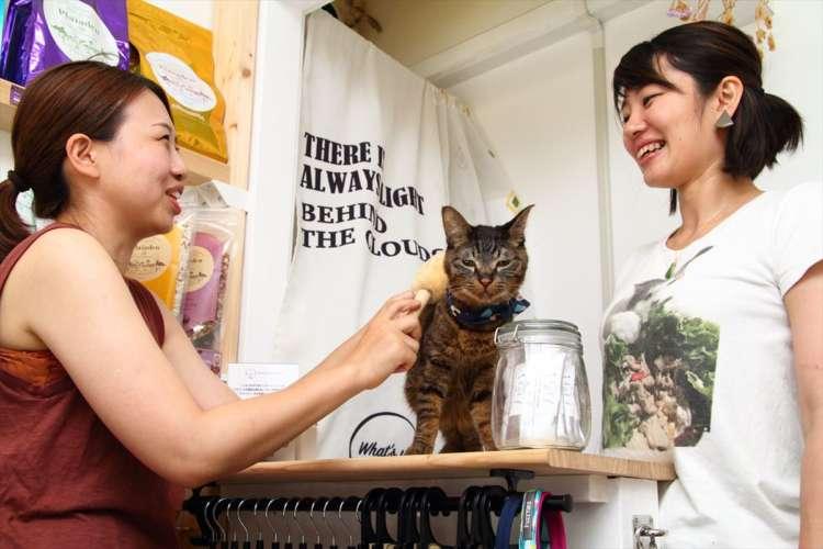 北山正積商店の「ペットたわし」はマッサージ効果で血行と毛艶が良くなる代物