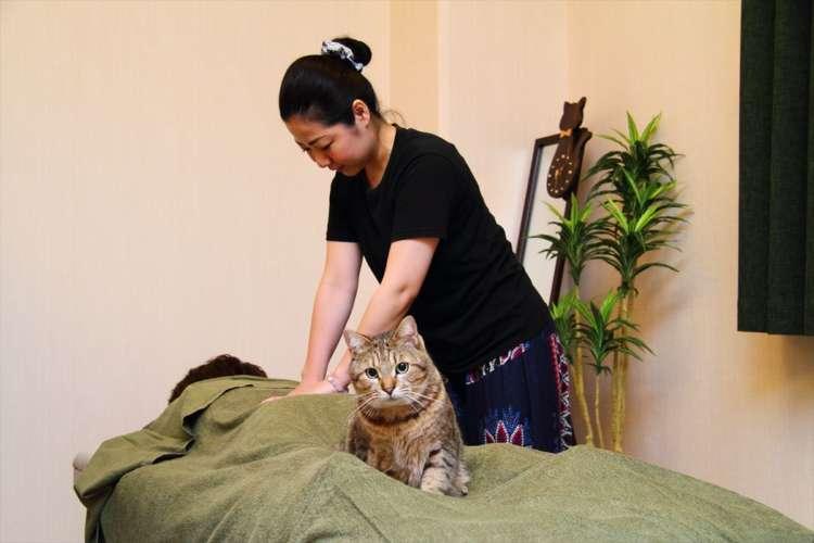 リラクゼーションサロン「Omochi」の猫店長【沖縄】
