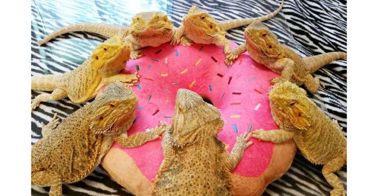 【会議してみたり、黄昏てみたり…】 金色のトカゲたちの静かな集会が、なんだかカワイイ(8枚)