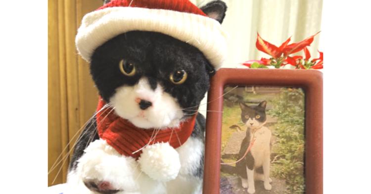 おかえりなさい…!14年ともに暮らした愛猫が、「オーダーメイドぬいぐるみ」になり帰ってきた。