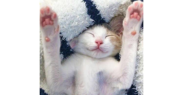 可愛すぎるニッコリ顔 & ピンクの肉球に釘付け! 万歳ポーズで眠るニャンコに…うっとり♪(59秒)