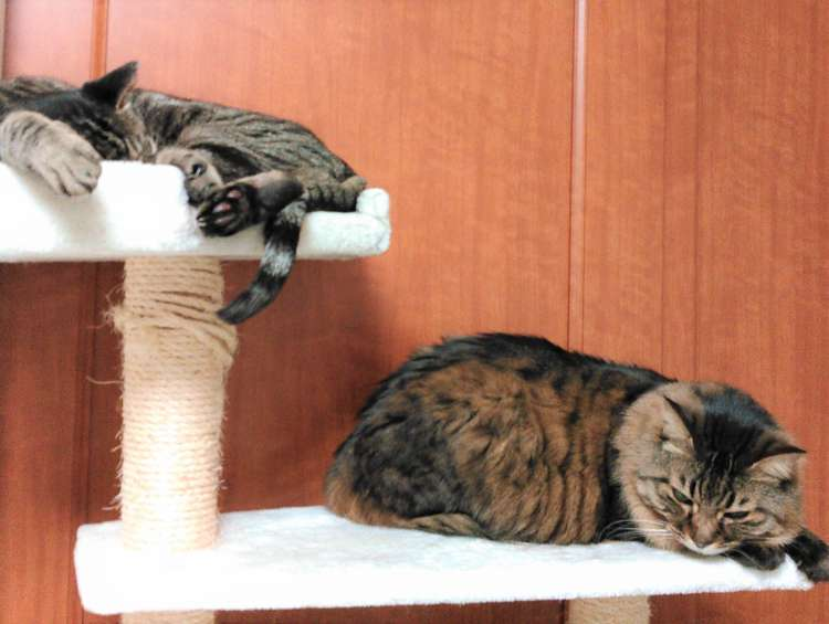 猫 オーダーメイドぬいぐるみ 長毛猫 ひまわり