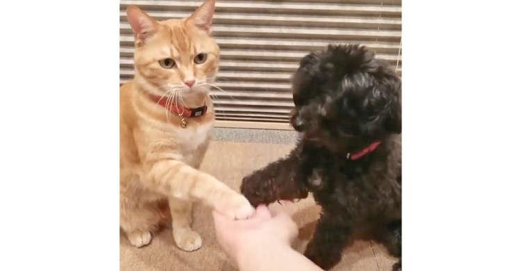 ニャンコとワンコが…ダブルお手! 飼い主さんの手にポン、ポンと肉球を乗せる2匹にほっこり♡