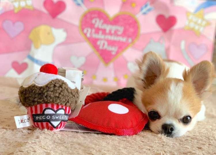 PECOBOX2月号「バレンタイン」フォトコンテスト開催決定! ハッシュタグをつけて応募しよう♪