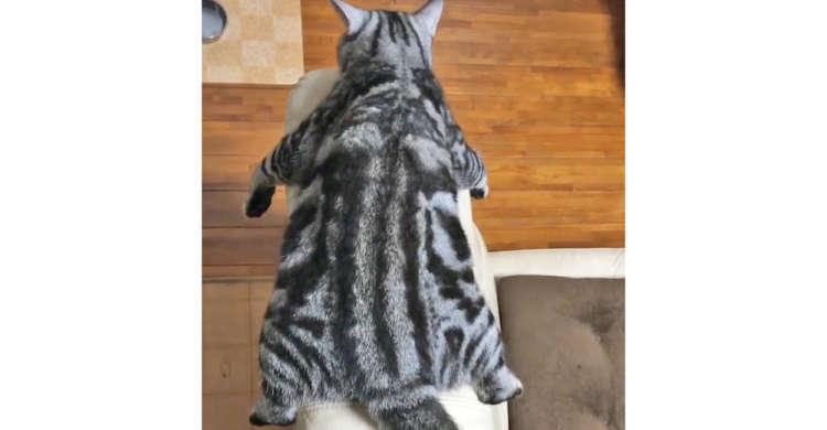 【ムササビ猫、現る!?】ソファでだら〜んとくつろぐニャンコ。シュールだけど可愛い様子に…クスっ♪
