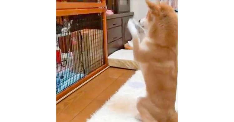 新しく家族になった子猫が気になるワンコ → 予想外な行動で子猫にメッセージを送る。その姿に…(笑)