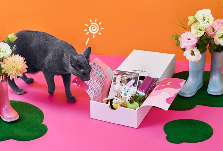 PECOBOX for Cats「春のお出かけ号」受付中♪ 愛猫のためのプレゼントについて解説!