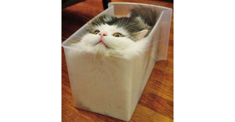 【猫パン焼けました!】透明な箱にみっちりと収まるニャンコさん。その姿は、まるで美味しそうな…♡