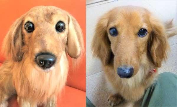 犬 ミニチュアダックスフンド ぬいぐるみ オーダーメイド