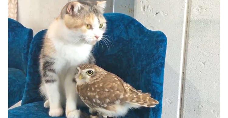 ニャンコとフクロウさんは…お友達♪ 隣り合って、まったりと過ごすふたりに心がなごむ(*´ω`*)♡