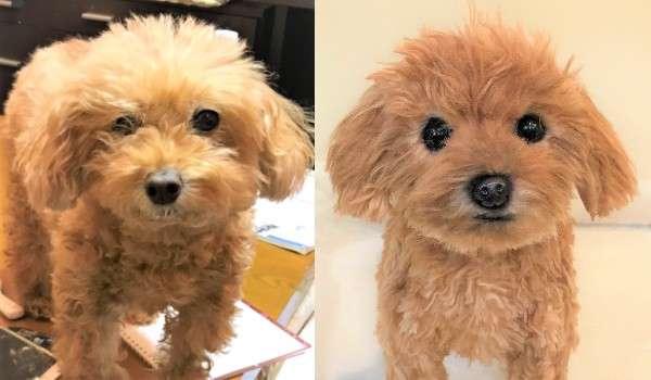 犬 トイプードル トイプー ぬいぐるみ オーダーメイド