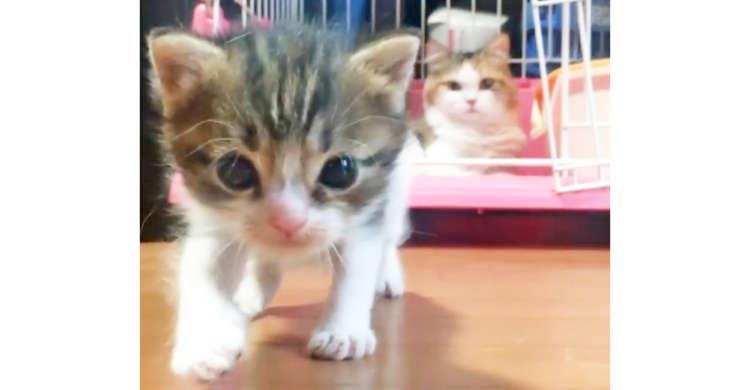 ちょっぴりドジな子ネコの大冒険。その姿をじっと見守る母ニャンコ。親子の愛と可愛さが詰まった58秒♡