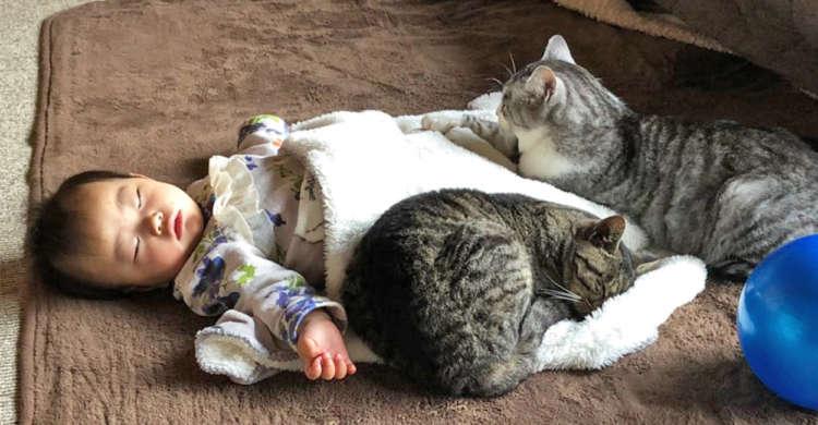 """赤ちゃんで暖をとるニャンコたち。そこには、見る人の心も温まる""""幸せの光景""""がありました♡"""