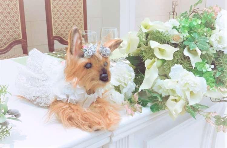 一人息子の「兄妹」のような存在だった愛犬が、ぬいぐるみとなって結婚式を見守っていました。