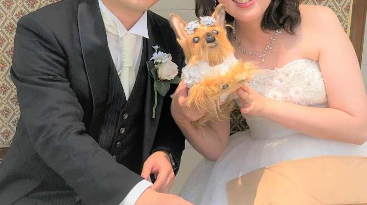 犬 ヨークシャーテリア ヨーキー 結婚式 愛犬 ぬいぐるみ
