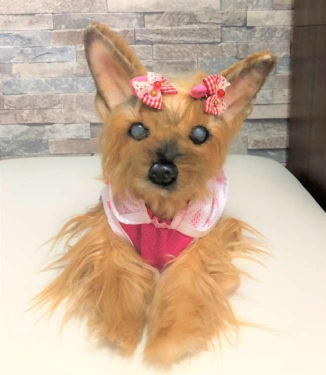 犬 ヨークシャーテリア ヨーキー 愛犬 ぬいぐるみ