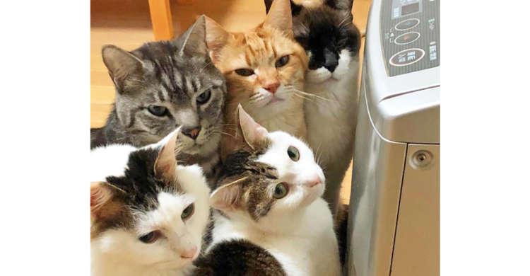 「早くつけるニャ…」。ヒーターをONにして欲しいネコたちのプレッシャーが、圧倒的すぎた( ゚Д゚)!