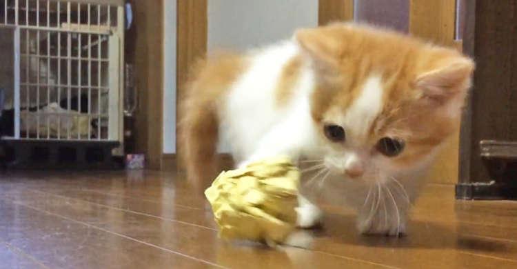 【にゃんにゃんサッカー】投げられた紙ボールを持ち帰る子ネコ! 可愛い手さばきに、釘付けになる♡