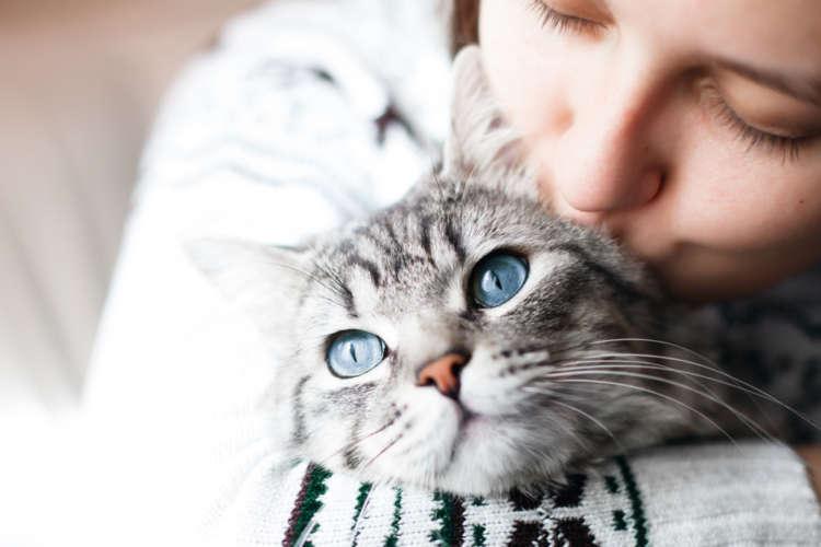 年間に6万頭以上の猫が迷子に!迷子対策はできていますか?