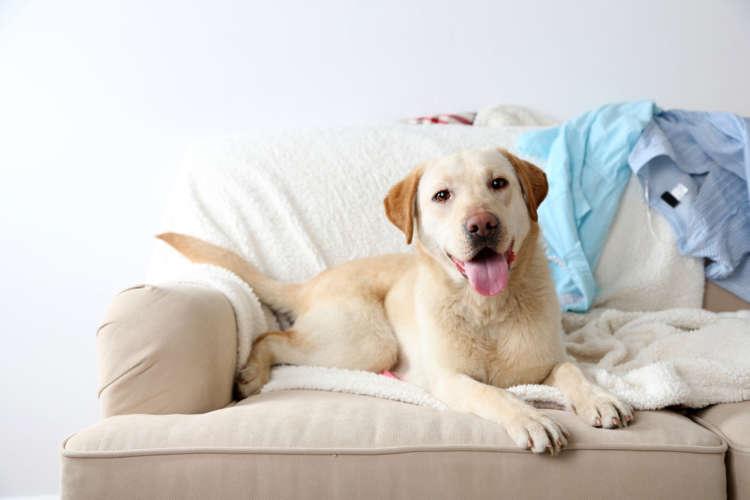 愛犬と室内暮らし。部屋や愛犬のおもちゃのニオイ対策はどうすればいい?