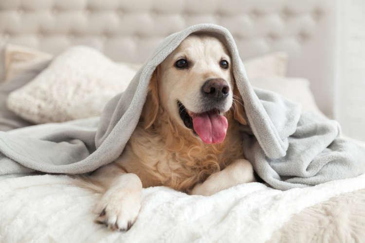 犬がマットレスにおしっこ!シミとニオイの解決方法
