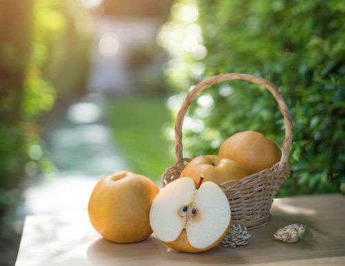【獣医師監修】犬が梨を食べても大丈夫!?種は与えてはダメ?梨の栄養素や効果、注意点!