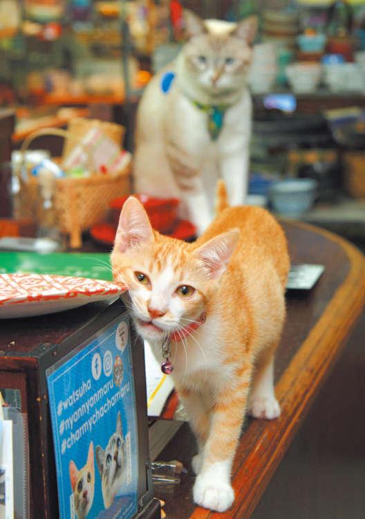 猫モチーフの和雑貨もたくさんあるニャーン
