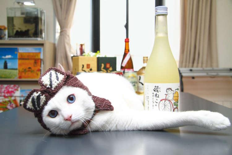 「美味しいから飲んでみてニャ!」ラベルのイラストそっくり