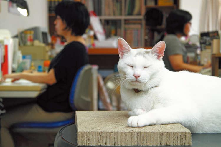 スタッフのデスクワーク中は菅原文太並みのシブい寝顔でキメる!