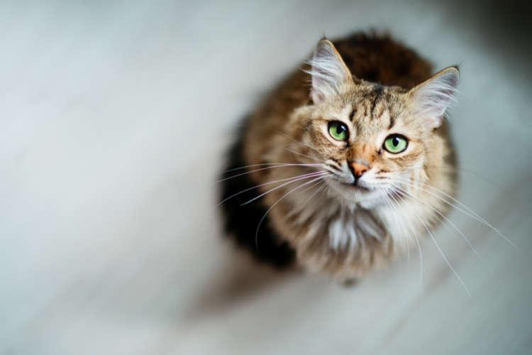 「愛猫の飼い主さんなら登録を…」迷子発見率80%を無料で実現する【PECO迷子ゼロ】を詳しく解説