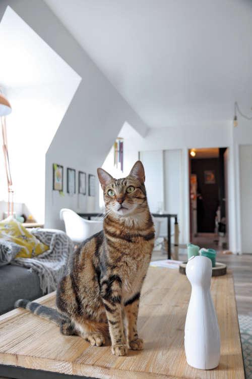自宅は憲兵 の兵舎。兵舎とは思えないほど広々とオシャ レで、猫もくつろげます