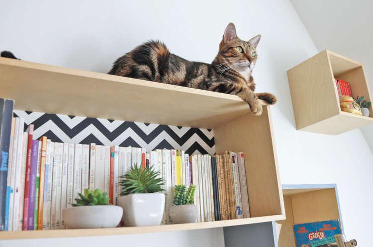 キャットウォー ク風に配置した本棚は、猫もお気に入り