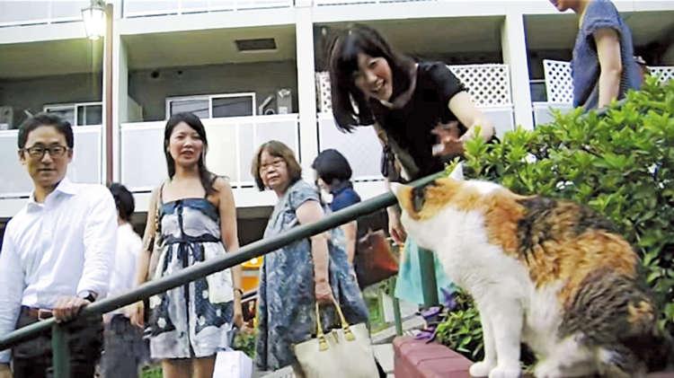 猫を見ると、みんな笑顔に!(映画より)