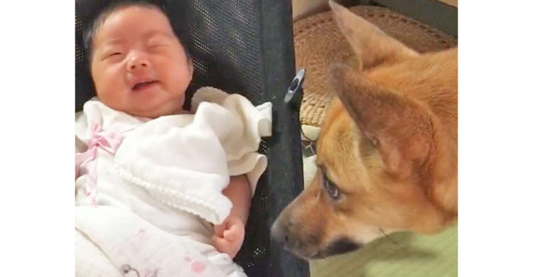 泣き出す赤ちゃんに戸惑うワンコ → それでも寄り添いペロペロして、一生懸命にあやそうとする姿が…♪