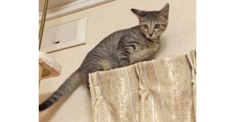 カーテンレールの上から降りられなくなった子猫。進んだり戻ったりと、困る様子が愛らしかった♡