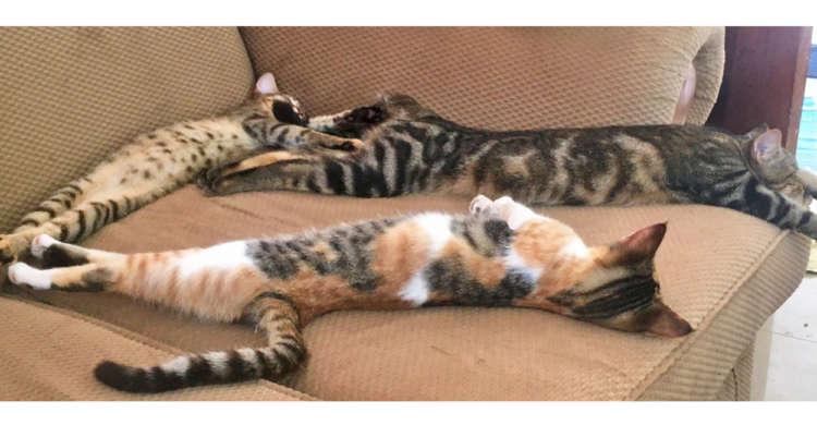 【猫背ってなんだっけ?】体をピーンと伸ばし、気持ちよさそうに眠るニャンコたちが話題にヾ(ΦωΦ)/