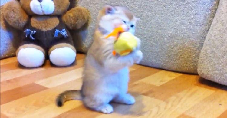 ひよこのオモチャと出会った子猫ちゃん! ドキドキしながら、パンチしたりカミカミしたりする姿が…♡