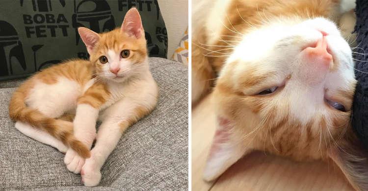起きている・眠っている時で別猫になるニャンコ。ギャップが大きすぎて思わず笑っちゃう(*´∀`) 7枚