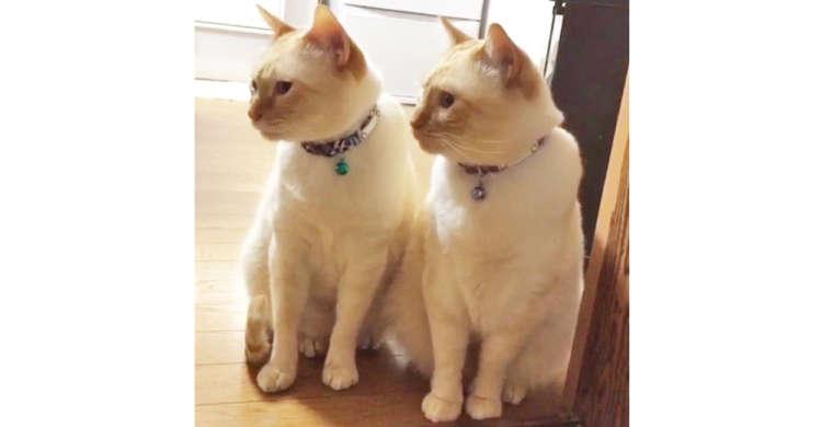 見た目も仕草もそっくりな双子のニャンコ! でも2匹には、思わぬ違いがあるのでした( *´艸`)♪