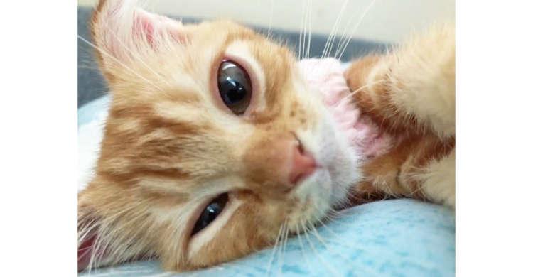 目が覚めたら目の前に子ネコの顔が…♡ 起きることも二度寝もできなくなる、最高の癒やし時間(*´ω`)
