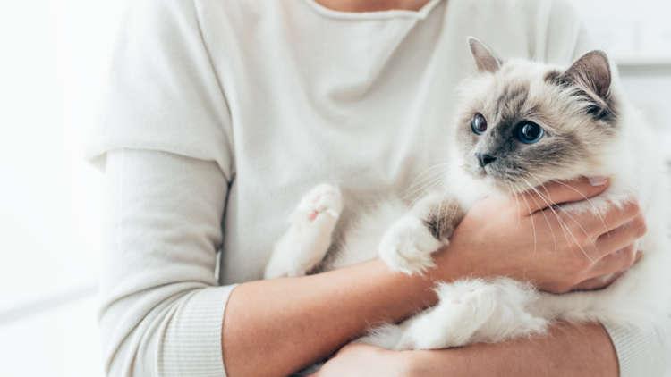 もしもの時に役立つ!猫の匂いの対処法とは!?