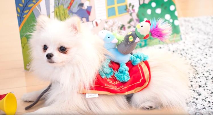 PECOBOX6月号『ブレーメンの音楽隊』受付中♪ 愛犬が喜ぶギフトについて、詳しく解説します!