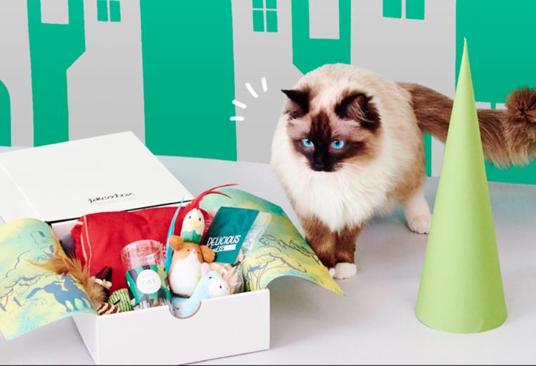 PECOBOX for Cats 6月号「ブレーメンの音楽隊」受付中♪愛猫のプレゼントについて解説!